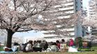 NDXA Cherry blossom...